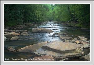 Mountain Laurel, Sope creek, Atlanta, Georgia.